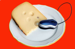 Maus isst sie Käse Lizenzfreie Stockfotografie