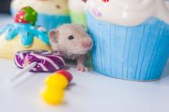 Maus mit kleinen Kuchen und Bonbons Ratte auf dem Hintergrund der hellen Süßigkeit lizenzfreie stockfotografie
