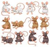 Maus mit unterschiedlicher Pelzfarbe stock abbildung