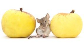Maus und Apfel auf einem weißen Hintergrund lizenzfreies stockbild