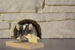 Maus und Falle Lizenzfreies Stockbild