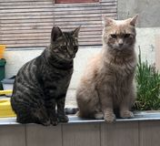 Mauvais chats photo stock