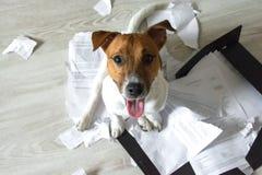 Mauvais chien sur les morceaux déchirés de documents photos libres de droits