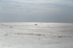 Mauvaise herbe congelée devant l'océan photo libre de droits