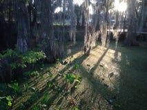 Mauvaise herbe de canard Photo libre de droits