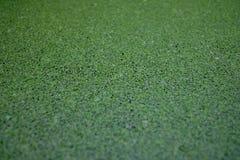 Mauvaise herbe de canard photos libres de droits