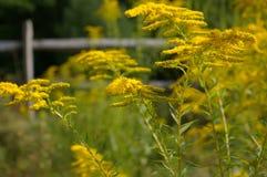 Mauvaise herbe de chiffon Image libre de droits