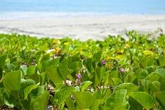 Mauvaise herbe de mer Photographie stock libre de droits