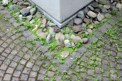 Mauvaise herbe entre les pierres Photographie stock libre de droits