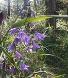 Mauvaise herbe ou fleur Photo libre de droits