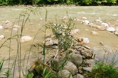 Mauvaise herbe par la rivière photographie stock libre de droits