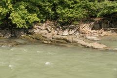 Mauvaise herbe par la rivière images stock