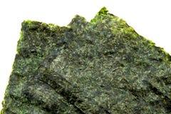 Mauvaise herbe sèche de mer Photographie stock
