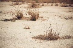 Mauvaise herbe sèche sur la terre sèche Photos libres de droits