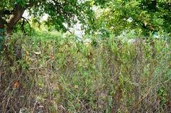 Mauvaise herbe sur la barrière Photo libre de droits
