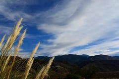 Mauvaises herbes Photo libre de droits