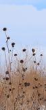 Mauvaises herbes 8 d'hiver Photos stock