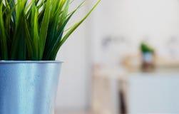Mauvaises herbes dans des pots photographie stock libre de droits
