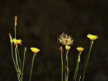 Mauvaises herbes dans l'arrière cour Photographie stock