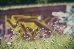 Mauvaises herbes et graffiti photographie stock libre de droits