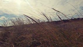 Mauvaises herbes et la vue Photos libres de droits