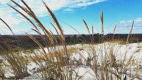 Mauvaises herbes et la vue Photographie stock libre de droits