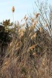 Mauvaises herbes fraîches dans la forêt par la rivière photo libre de droits