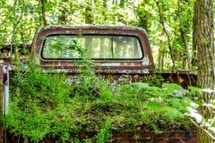 Mauvaises herbes s'élevant dans le lit du camion pick-up Photos libres de droits