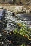 Mauvaises herbes sur le déversoir Photographie stock libre de droits