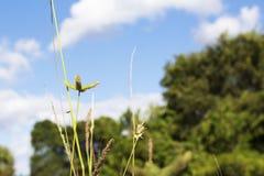Mauvaises herbes toujours Image libre de droits