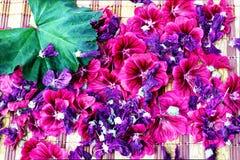 Mauve bloemen verse pasklaar met blad Royalty-vrije Stock Fotografie
