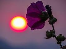 Mauve et soleil violets Images stock