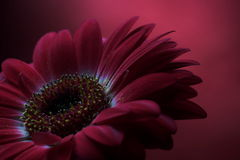 Mauve Flower Composition 2. Royalty Free Stock Photography