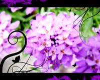 Mauve flowers. Bouquet of dreamy flowers with butterflies silhouette, close-up Royalty Free Stock Photography