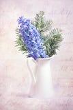 Mauve hyacinth Stock Images