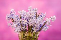 Mauve Hyacinthus orientalis flowers (common hyacinth, garden hyacinth or Dutch hyacinth) in a transparent vase, close up Stock Photos