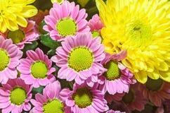 Mauve i żółci chryzantema bukieta kwiaty Obrazy Stock