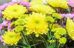 Mauve i żółci chryzantema bukieta kwiaty Zdjęcia Royalty Free