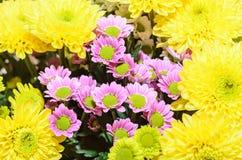 Mauve i żółci chryzantema bukieta kwiaty Obrazy Royalty Free