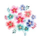 Mauve rose de bleuets de wildflowers colorés lumineux magnifiques de fines herbes floraux de ressort sophistiquée belle par offre Image libre de droits