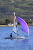 Mauve sailing. Small yacht with a mauve spinnaker royalty free stock images