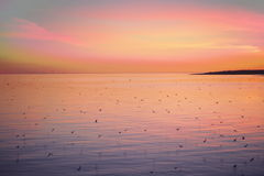 Mauve sunset over the sea and the birds. Mauve sunset  on the Solovetsky Islands, the island of terns Stock Photo