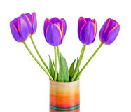 Mauve tulips flowers with yellow stripes, colored flowerpot, vas Royalty Free Stock Images