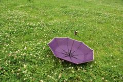 Mauve umbrella Stock Images