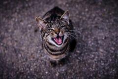 Mauwend gestreepte katkatje dat zeer hongerig is royalty-vrije stock fotografie