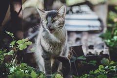 Mauwend gestreepte katkatje in openlucht stock foto's