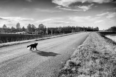 maverick Στοκ εικόνες με δικαίωμα ελεύθερης χρήσης
