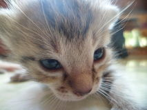 Mavin猫 库存图片