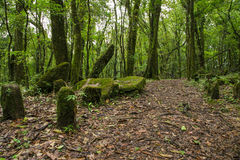 Mawphlang sagrado del bosque imagen de archivo libre de regalías