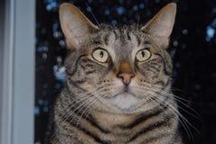Max The Cat Fotografia Stock